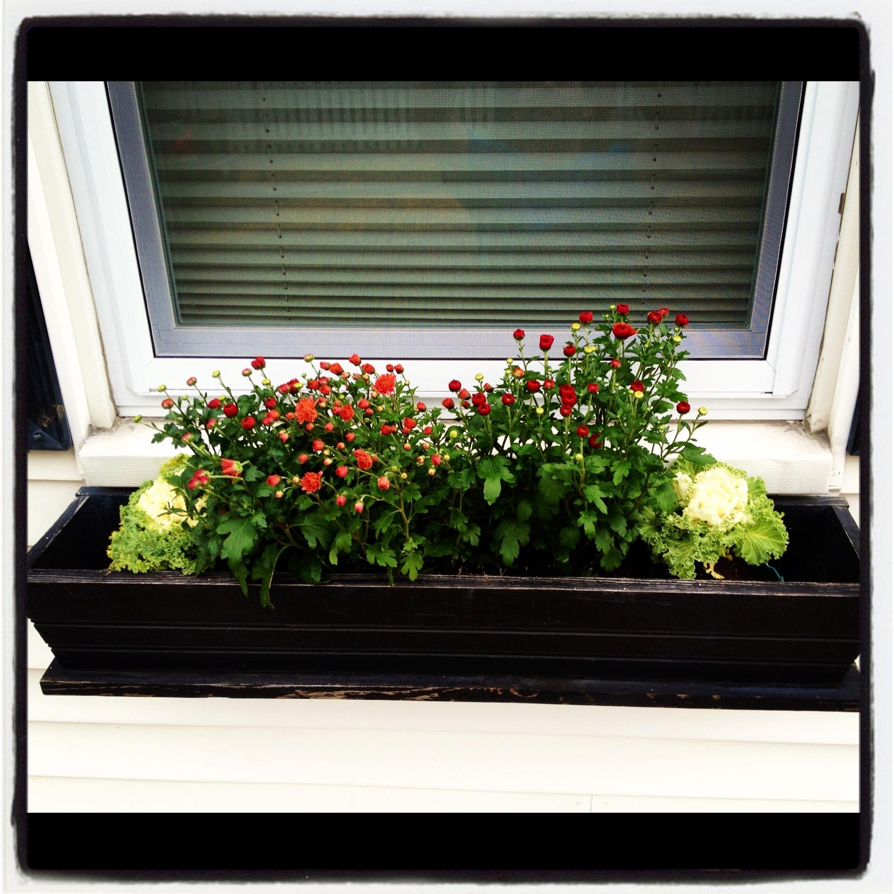 Fall Window Boxes 2012